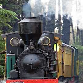 Glen Afton Heritage Railway by Teodora Motateanu - Transportation Trains ( rails, heritage, railway, trains, train )