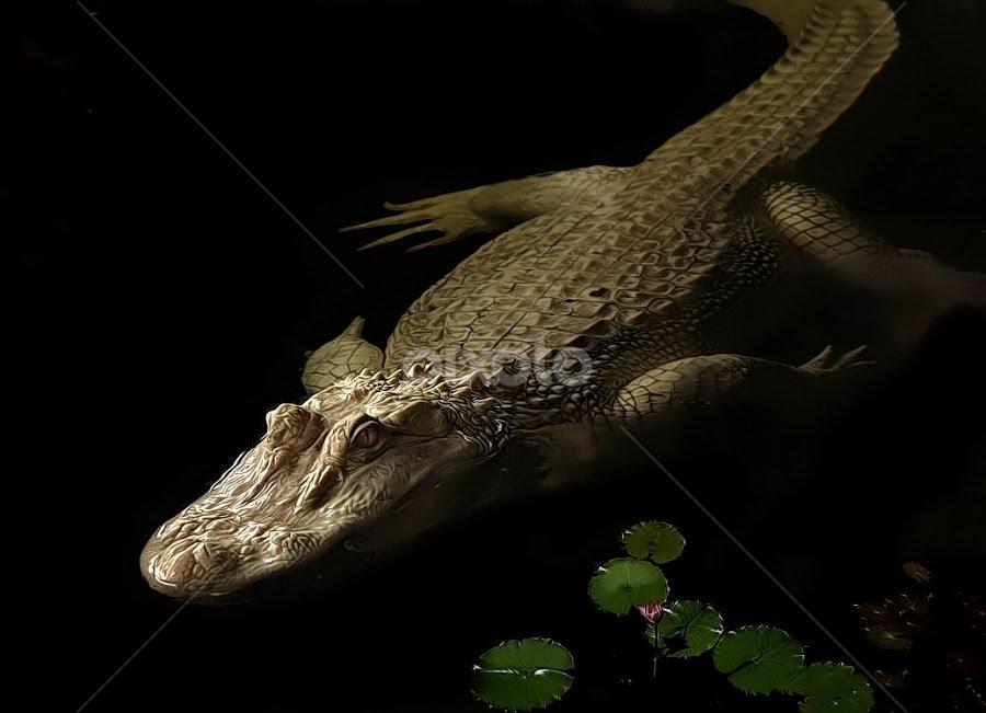 White Knight by John Larson - Animals Reptiles