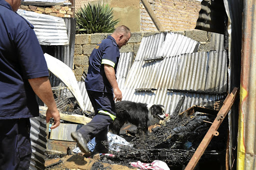 A sniffer dog helps emergency personnel at the scene where two children were burnt to death while sleeping inside a shack in Kagiso on the West Rand.