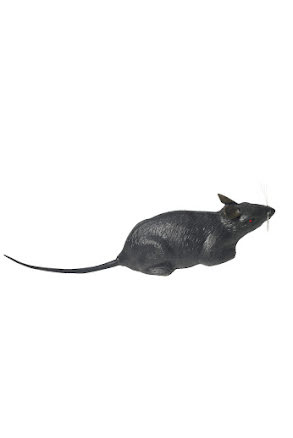 Råtta, plast