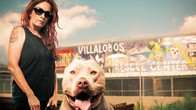 Pit Bulls & Parolees: Puppy Tales