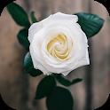 Flower Wallpaper - HD Wallpaper icon