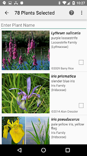 New Hampshire Wildflowers- screenshot thumbnail