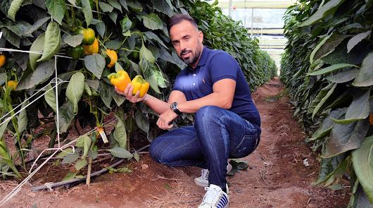Campojoyma completa su oferta de pimiento bio produciendo en Murcia