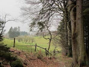 Photo: Aan de rand van het Staatsforst Monschau