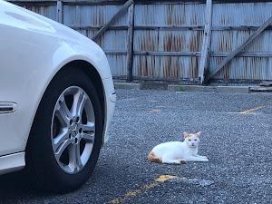 Eクラス ステーションワゴン W211のカスタム事例画像 とよでぃーさんの2020年09月04日21:01の投稿