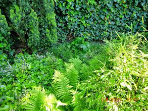 Photo: Naturgarten Düsseldorf Lohausen, Hintere Ecke mit Heide, Farnen, Efeu, Bambus und echtem Bärenklau