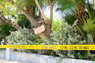 "Photo: Unfortunately I didn't see Horatio Caine in this scene from Key West. The cardboard on the tree says: ""No Crime - BEES!"""