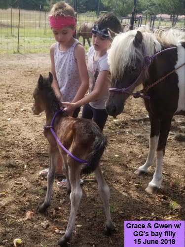 Bee-Bay - 2018 bay mare by Toro out of GG