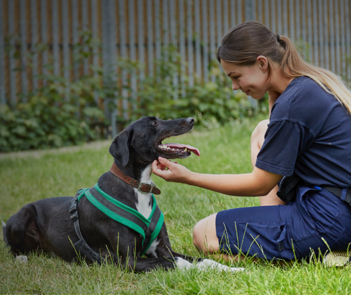 How the RSPCA saves time and tails