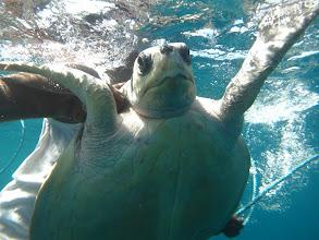 Photo: Nasranější želvu jsem ještě neviděl.