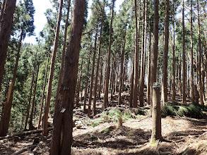 植林帯を進む(ここから登りに)