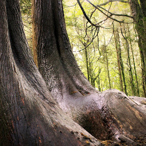 Giant's Feet by Oona Tully - Landscapes Forests ( trees, woodland, forest )