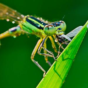 Dragonfly02_05F.jpg