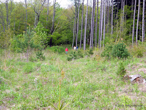 Photo: Re-entering the meadow from the pine forest