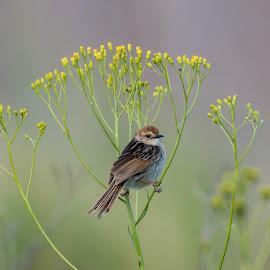 Bird through the lens is worth a walk through the bush by Geoff Jordaan - Uncategorized All Uncategorized (  )