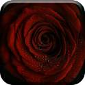 Beatiful Roses Live Wallpaper icon