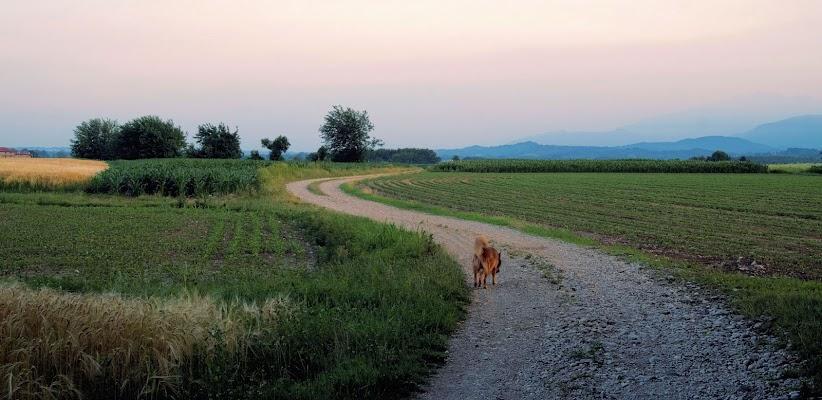 country di clarin65