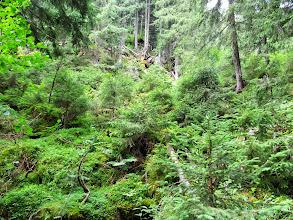 Photo: 14.W leśnej zieleni.