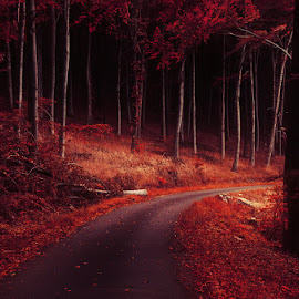 20171014-DSC_2112 by Zsolt Zsigmond - Landscapes Forests ( red, autumn, fall, trees, forest, road, light )