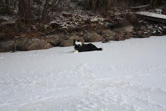 Photo: Remu ihmettelee, että mikäs tuolla metsässä liikkuu...?
