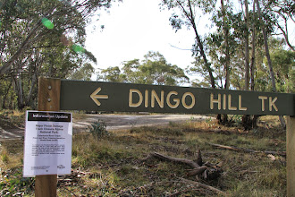 Photo: We went up the Dingo Hill Track. Note to Kylie & Mark, Jack & Angus - remember this track? It's still closed due to a memorable landslide, 8 months later