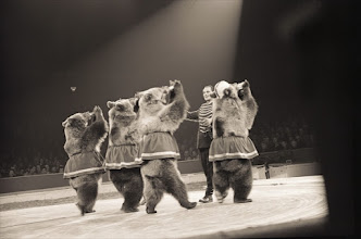 Photo: JKP244667 Dancing bears at Bertram Mills' Circus, January 1957 (b/w photo) ; black and white photograph; Private Collection; Jack Paynton; out of copyright