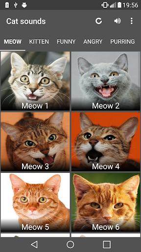 Cat Sounds image 6