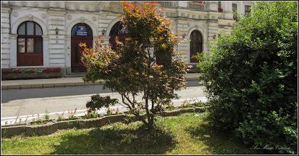 Photo: Arțar roșu (Acer rubrum) - din Turda, Piata 1 Decembrie 1918, parc - 2019.06.28