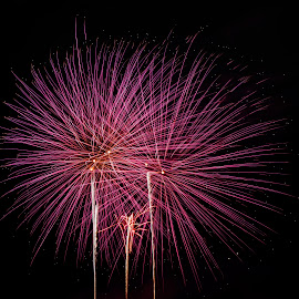 Pink Fireworks by Darlene Moyer - Abstract Fire & Fireworks ( sky, pink, fireworks,  )
