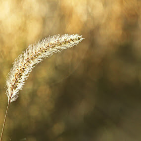 Assignment: Capture Light - S-N-S Photos by Stephanie Munguia-Wharry - Nature Up Close Leaves & Grasses ( grass )