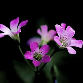 Flowers by Christian Wilen - Flowers Flower Gardens ( cirre1,  )