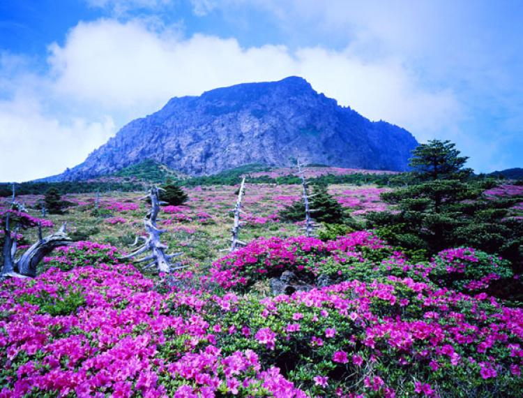 Tour du lịch Hàn Quốc Ảnh 1