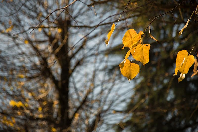 Autunno in giallo di francescafiorani
