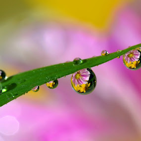 Flower in the dew by Twin Chan - Abstract Water Drops & Splashes