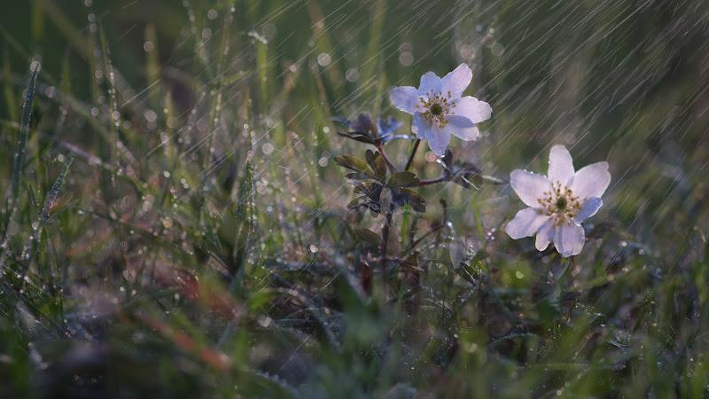 Pioggia Primaverile di Robipiro