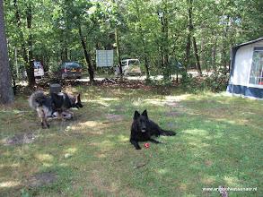 Photo: En de hondjes in de schaduw