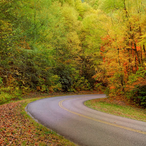 Autumn Road by Karen Carter Goforth - Landscapes Travel ( autumn, fall, trees, road,  )