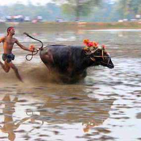 Kambala a village sports!!! by Achintya Guchhait - News & Events World Events
