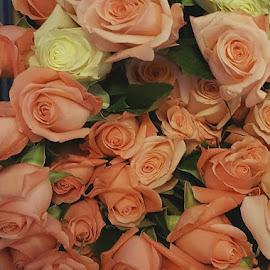 by Jean Hanseter-Poeschl - Flowers Flower Arangements (  )