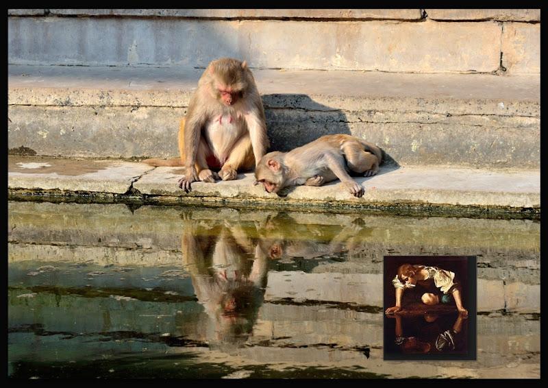 Il Narciso di Caravaggio. di matteo_maurizio_mauro