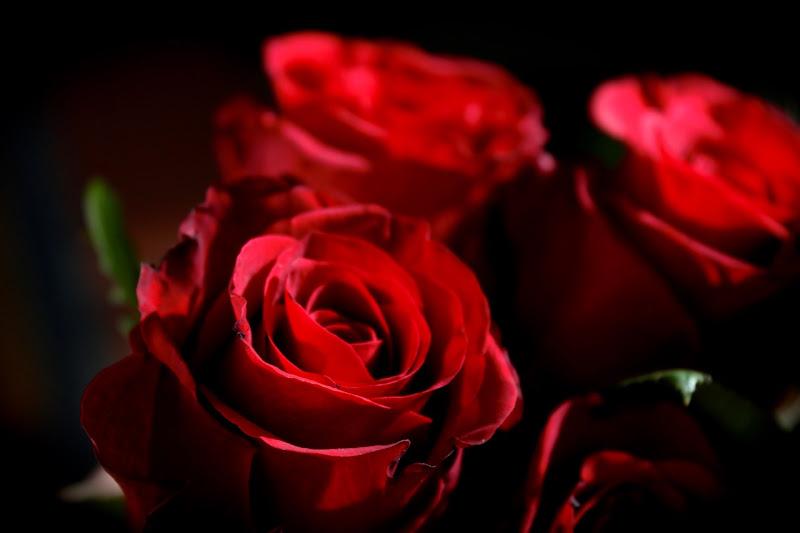 Rosae di crippi