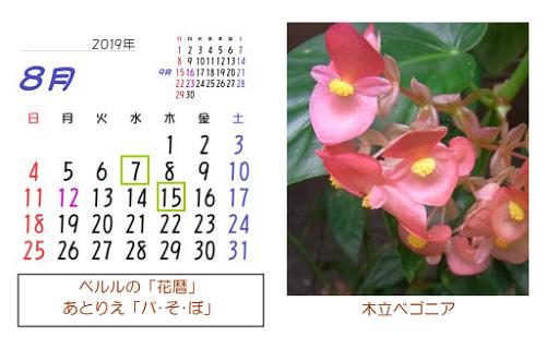 8月の花暦