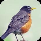 Robin Bird Sounds icon