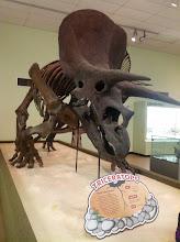 Photo: Triceratops