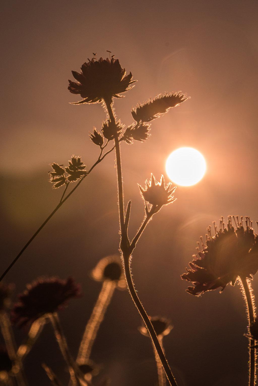 Un benvenuto al sole