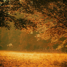 Paradise by Damir Ipavec - Landscapes Forests