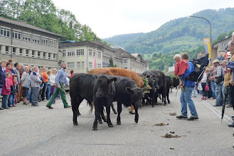Photo: Nicht alle wollen die Strasse runter