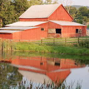 Red Barn by Angel Harvey - Novices Only Landscapes ( reflection, red, barn, west virginia, pond,  )