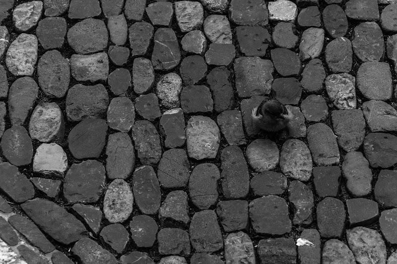 geometrie di sassi di tore